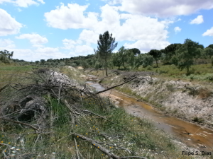 Recently cleared riparian vegetation.