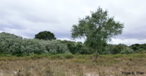 Riparian vegetation beside a stream after five years of certification