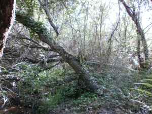 A riparian gallery by a least-disturbed and well-conserved stream.
