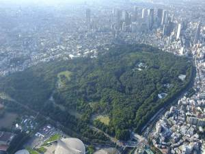 Land-sparing development in Tokyo. Photo provided by Masa Soga.