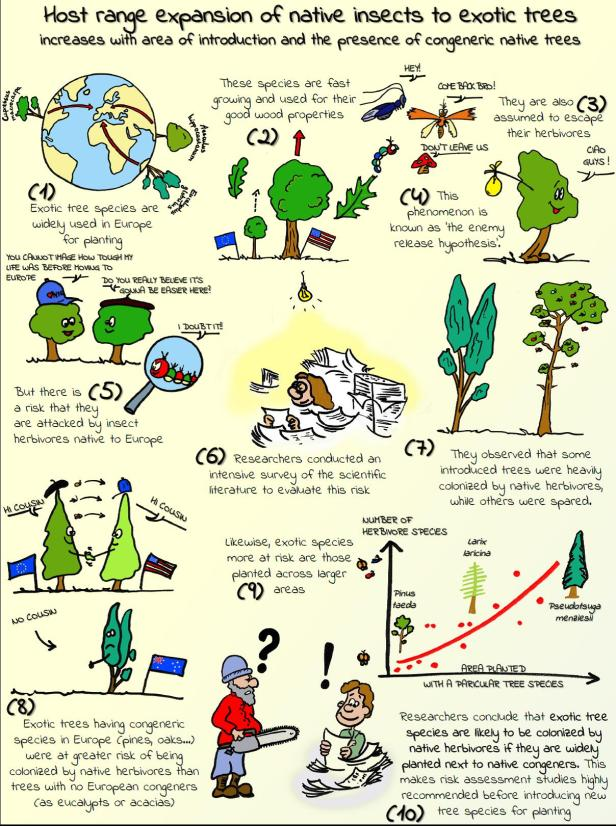 Exotic trees at risk of native insect attack_cartoon_Branco et al