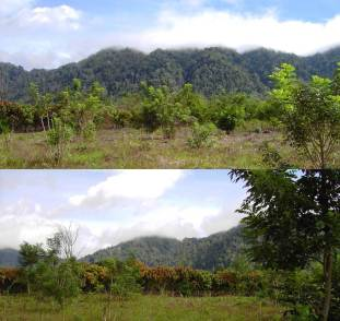 Cacao plantations close to the primary forest block of the Lore-Lindu National Park in Central Sulawesi, Indonesia (Photo: Bea Maas)