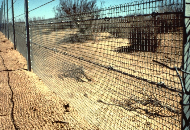 Example of a dryland fence barrier. From: Photo by William I. Boarman, USGS, From press release: USGS Report Finds Too Few Studies Assess the Success of Desert Tortoise Recovery Actions, Aug. 10, 2006. http://online.wr.usgs.gov/ocw/g_agassizii/barrier_fence.jpg