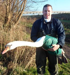 The author with a mute swan Cygnus olor, one of the study species for which an IBM of herbivore foraging behaviour has been developed recently (Wood et al. 2014).