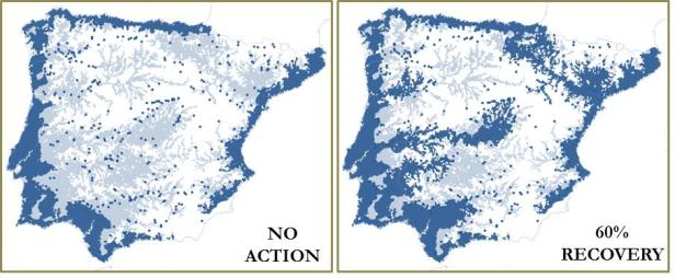 Impact of dams on eel range and effect of enhancing river connectivity through dam management. The blue area marks suitable areas for the eel and the semi-transparent layer marks the areas made inaccessible by dams. For the present situation (left map) 20 reservoirs would need to be managed to allow the access of the eel to 60% of its baseline range.