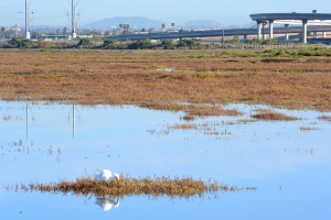 Sweetwater Marsh at San Diego Bay National Wildlife Refuge. Creative Commons license, Lisa Cox (US Fish and Wildlife Service).