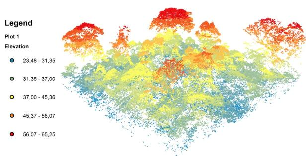 LiDAR-generated 3D model of forest canopy structures.