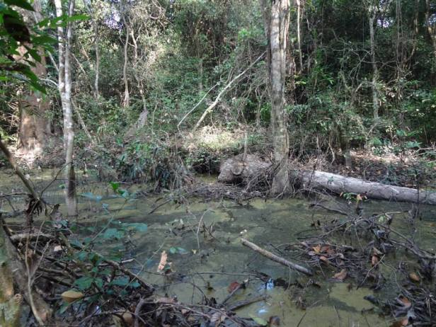 """A severely logged """"open"""" forest in Cambodia (photo taken by Minerva Singh)."""