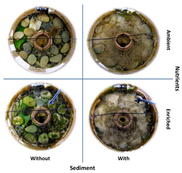 Photo of circular stream mesocosms on Day 10 of the manipulative period by nutrient and sediment treatments. Inflow jets creating clock-wise flow are visible at the top and outflow drift capture nets are visible in the centre of each mesocosm. Nutrient enrichment drippers are visible in enriched mesocosms and green leafpacks are visible in mesocosms without added sediment.