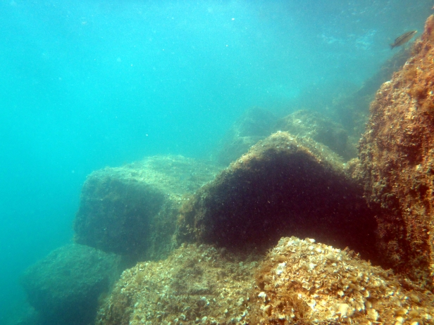 Low structural complexity biological community colonizing a breakwater (Photo credit F. Ferrario).