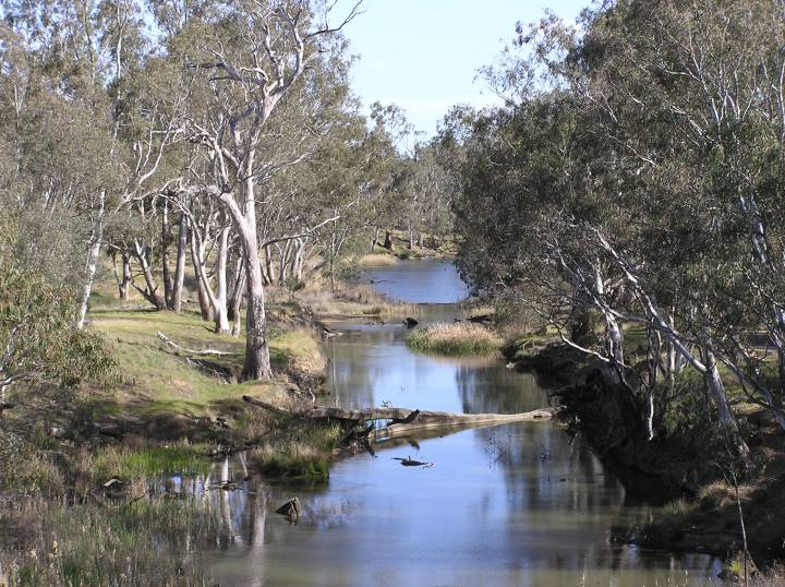 A typical riparian strip in the study region.