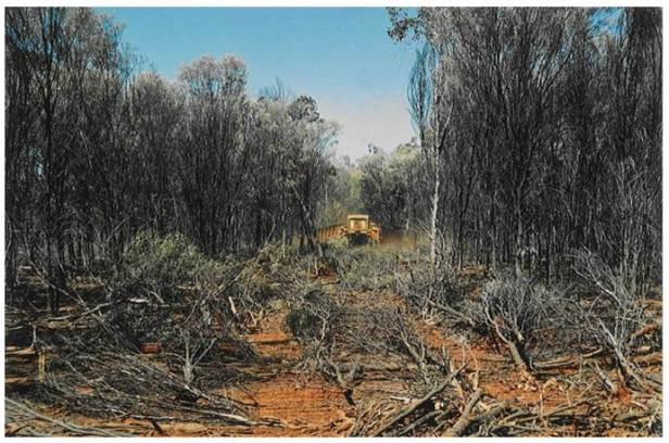Clearing of Mulga habitat