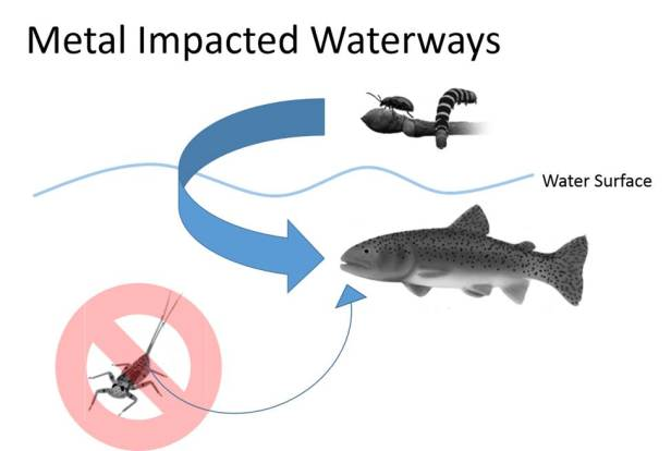 Conceptual model of fish diet in a metal impacted stream. Metals reduce availability of aquatic insects (no symbol). Size of arrows indicate relative importance of prey resources. Illustrations: Freshwaters Illustrated/USGS.