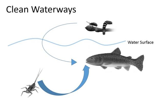 Conceptual model of fish diet in a pristine stream. Size of arrow represents relative importance of two prey resources. Illustrations: Freshwaters Illustrated/USGS.