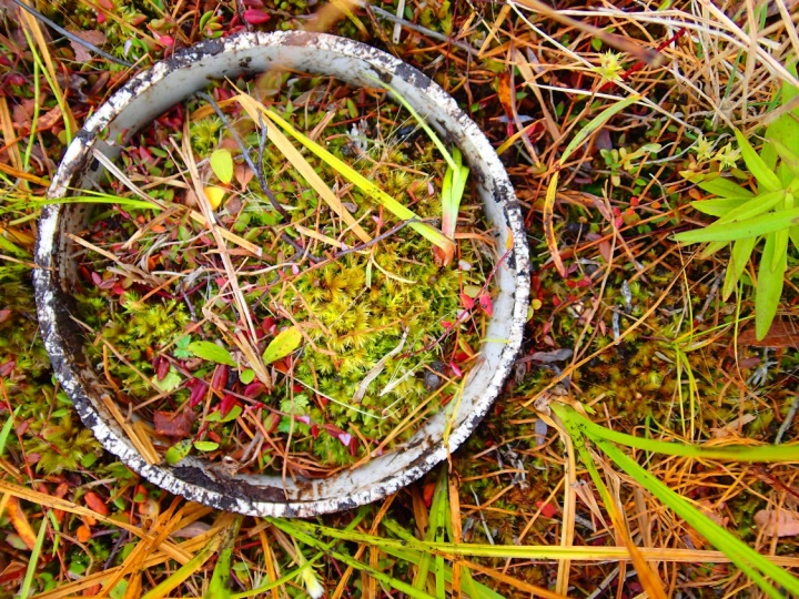 Core used to sample moss biomass