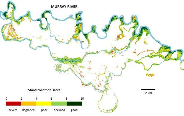Condition map for Eucalyptus camaldulensis