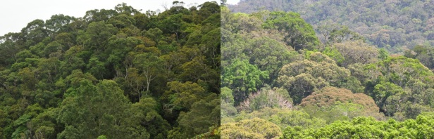 Recovered and primary forests