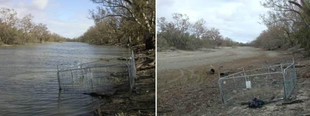 Seedling plot at Walpolla Creek