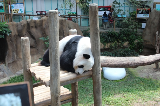 Giant Panda Enclosure