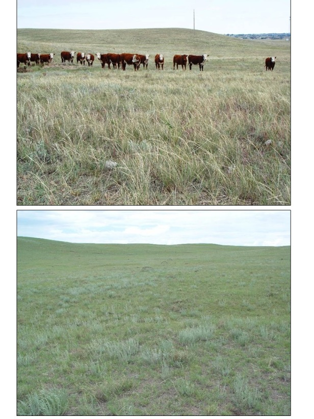 HPGRS_mixedgrass_light_vs_heavy_grazing