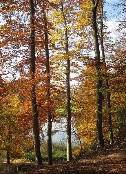 european-beech-forest