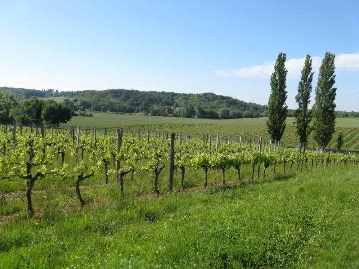 vineyard_aquitaine2