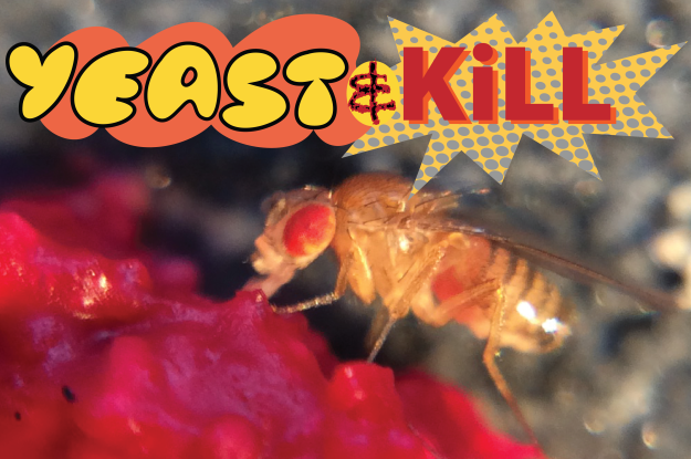 fly yeast & kill 2.png