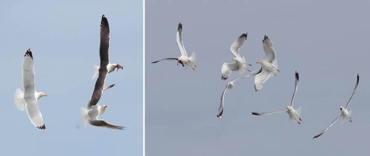 marine-birds