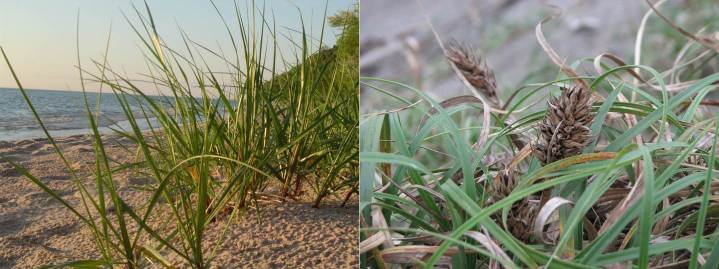 dunes-two