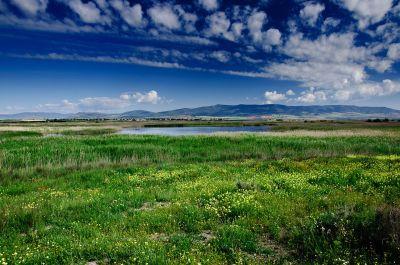 Las Tablas de Daimiel grassland (photo from: https://commons.wikimedia.org/wiki/File:Las_Tablas_de_Daimiel_grassland.jpg).