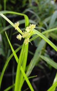 Dawson_wetlands3_May17