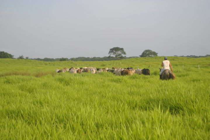 Alvarado et al. 2017-JAE-Conservation in tropical cattle farming landscapes