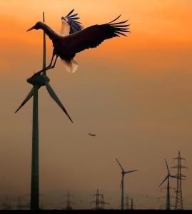 Stork - wind turbine