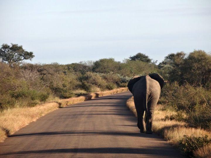 Elephant on road - Manuela