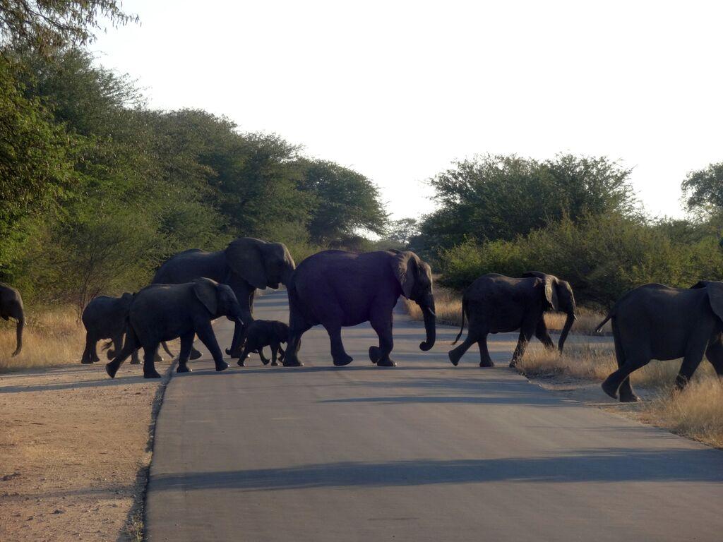 Where should we build wildlife crossings?