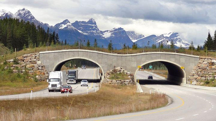 Wildlife_overpass_Trans-Canada_Hwy_between_Banff_and_LakeLouise_Alberta