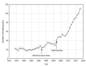 Ferrer graph
