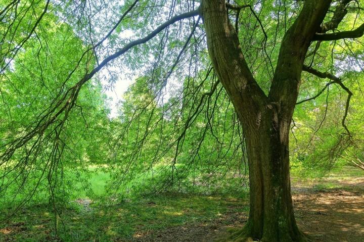 Urban trees - Sussex