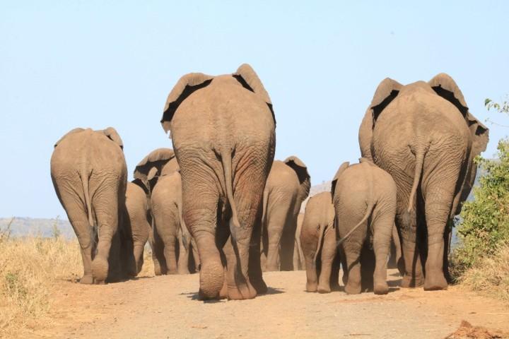 Elephants to water_Tim Kuiper