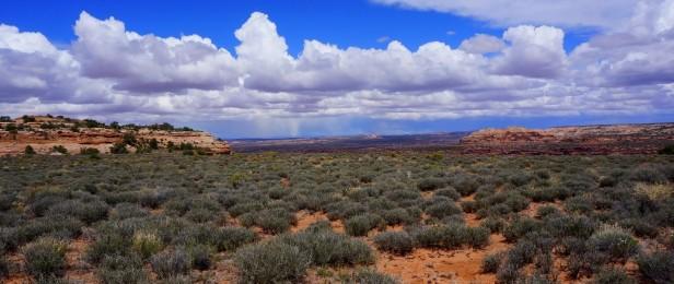 Blackbrush shrubland - Canyonlands National Park