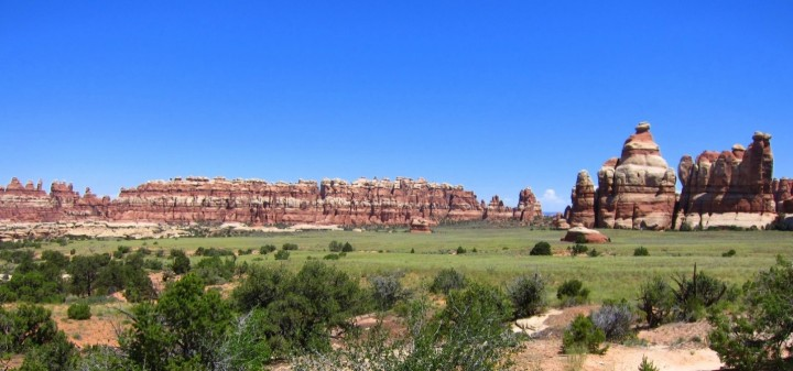 Grassland - Canyonlands National Park