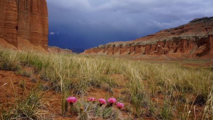 Grassland - Capitol Reef National Park