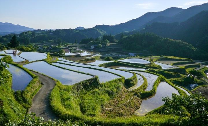 Riche terraces - Japan