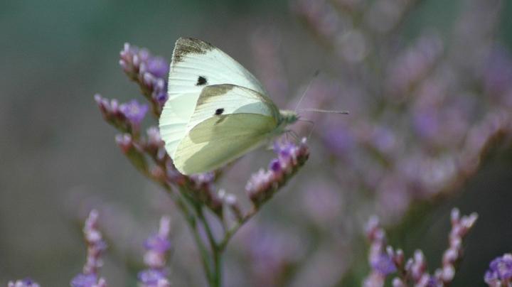 butterfly-2777414_960_720