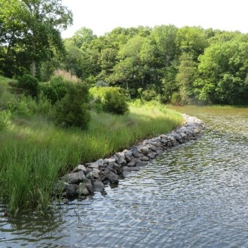 Living shorelines 2