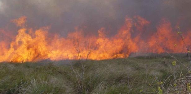 800px-A_cypress_prairie_burns_during_a_early_spring_prescribed_fir