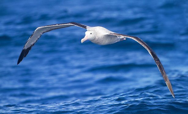 Albatross_JJ Harrison