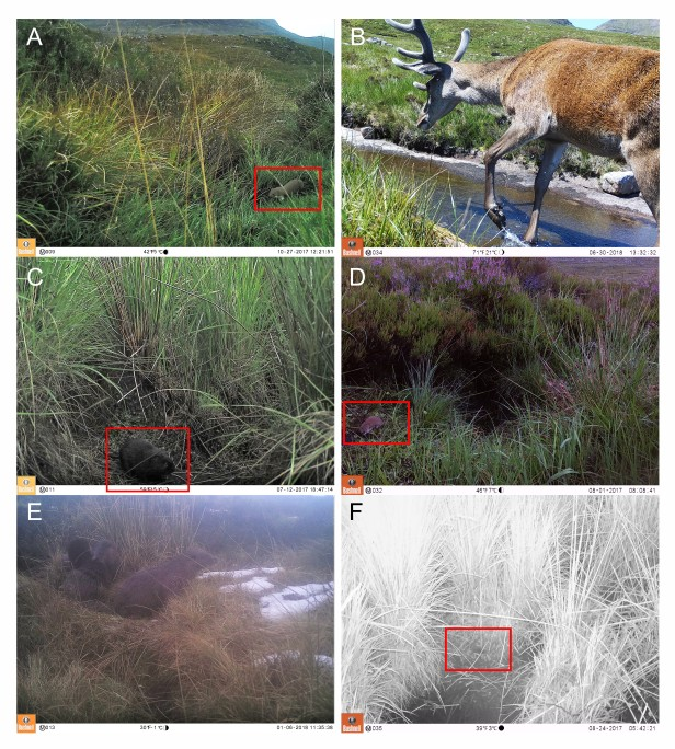 Camera trap image examples