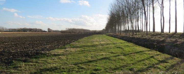 Grass Buffer_BertReubens