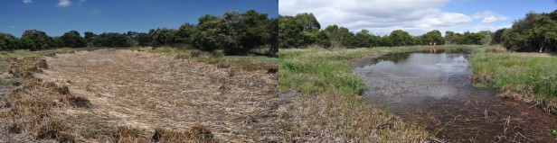 Wetland drained and refilled_Jayne Hanford